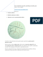 Bacillus anthracis.docx