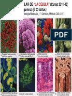 biomolcelula.pdf
