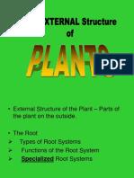 Plant Part Roots