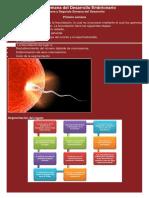 Primera y Segunda Semana del Desarrollo Embrionario.docx
