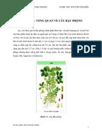 Đề Tài Tìm Hiểu Về Protein Đậu Phộng