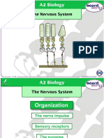 The Nervous System (3).ppt
