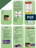 triptico de parasitologia.docx