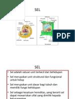 2-sel.pdf