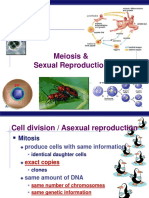 mitosis dan meiosis english.ppt