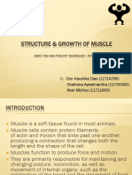 Structure & Growth of Muscle