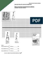 ACTIVIDADES PREHISTORIA.pdf