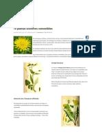 10 plantas silvestres comestibles - Ciencia y Mucho Más.pdf