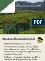 Avocado Nov9 3PM