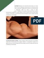 25 Formas de Construir Tus Bíceps