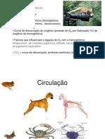 Circulação_1.pdf