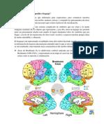Cómo El Cerebro Hace Posible El Leguaje