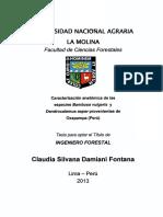 FIBRA DENDROCALAMUS.pdf