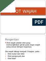 Otot Wajah
