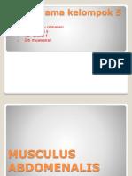 KELOMPOK 5 - Musculus Abdomenalis
