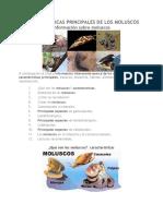 Características Principales de Los Moluscos