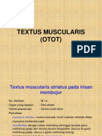 Review Praktikum 2 a Muscularis