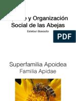 ApidaeyOrganizacionSocialAbejas