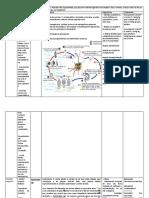 Tabela Dos Platyhelmintes - Trematoda
