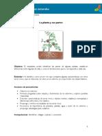 3°-La-planta-y-sus-partes