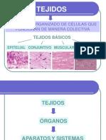 Tejido epitelial FCV