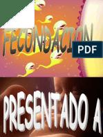 FECUNDACIONYSEMANAS NAVARRO EXC. 1A CLASS].ppt