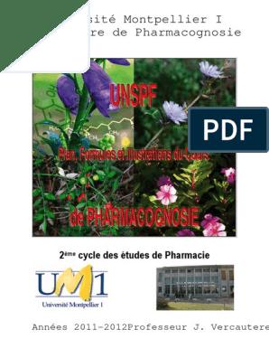 Mandragore officinale nouvelle récolte 2019. mandragora sachet de 12 graines