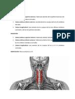 musculos cervical anterior