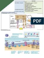 Fisiología y Bioquímica de la visión