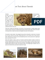 Report Text About Cheetah.docx