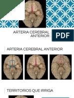 Arteria Cerebral Anterior.pptx