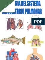2.1.0-Circulación_Pulmonar.ppt