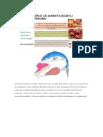 Clasificacion de Los Alimentos Segun Su Funcion