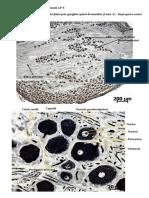 Histologie-si-embriologie-animala-Imagini-LP-8.pdf