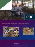 Sistema de producción y ventas de ovinos camilo adsi.pptx