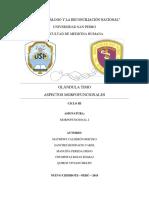 FINALIZADO-AULA-C-MORFOFUNCIONAL-GLANDULA-TIMO 2.2.docx
