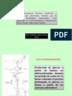 t11 - A - Gluconeogénesis