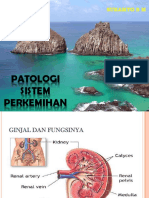Patologi Sistem Perkemihan