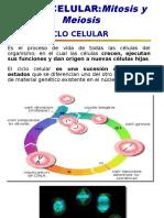 ciclo_celular imprimir.ppt