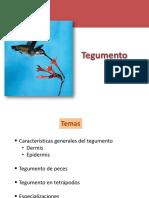 2.Tegumento (5).pdf