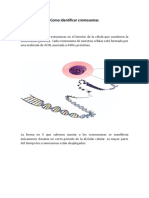 Como Identificar Cromosomas