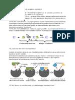 13)¿Cuál Es El Mecanismo de La Catálisis Enzimática