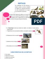 Anatomia Del Macho.