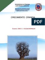 Esqueleto Craneal