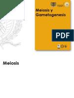 Clase Meiosis y Gametogénesis