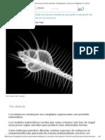 ¿Cómo Se Forman Las Conchas Marinas_ _ Investigación y Ciencia _ Investigación y Ciencia