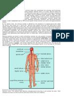 Lec4 Nervous System