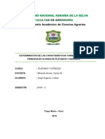 P-1.-Determinación de Las Características Varietales de Los Principales Clones de Plátanos y Bananos.
