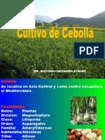 Cultivo de La Cebolla Ok 2017