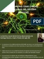 La Neurona Como Unidad Funcional Del Sistema Nervioso